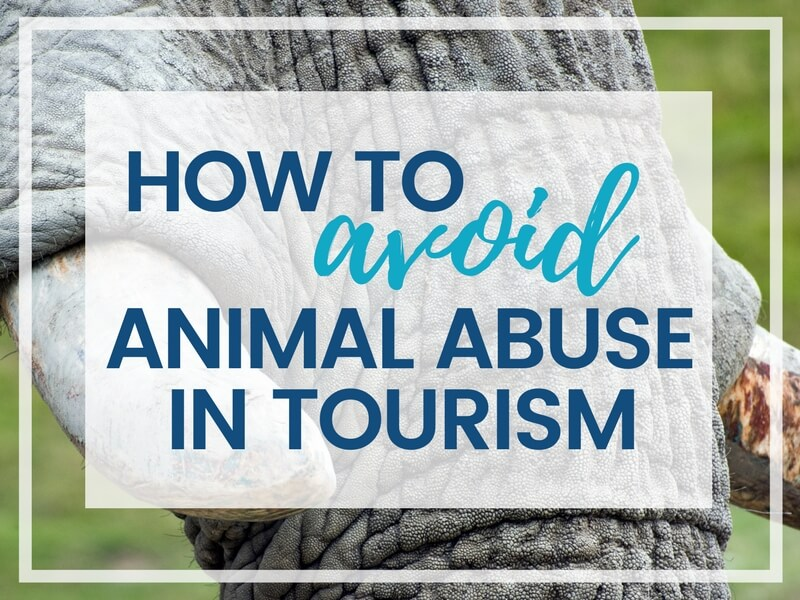 HOW TO AVOID ANIMAL ABUSE IN TOURISM