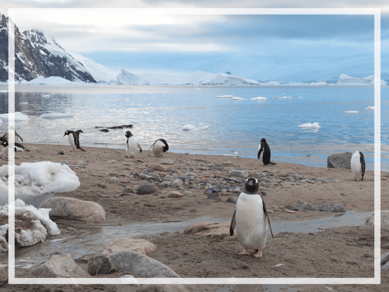 In order to make the most of your journey, there are a few things to know before visiting Antarctica. Discover tips to ensure you have an amazing adventure! #antarctica #antarcticatips